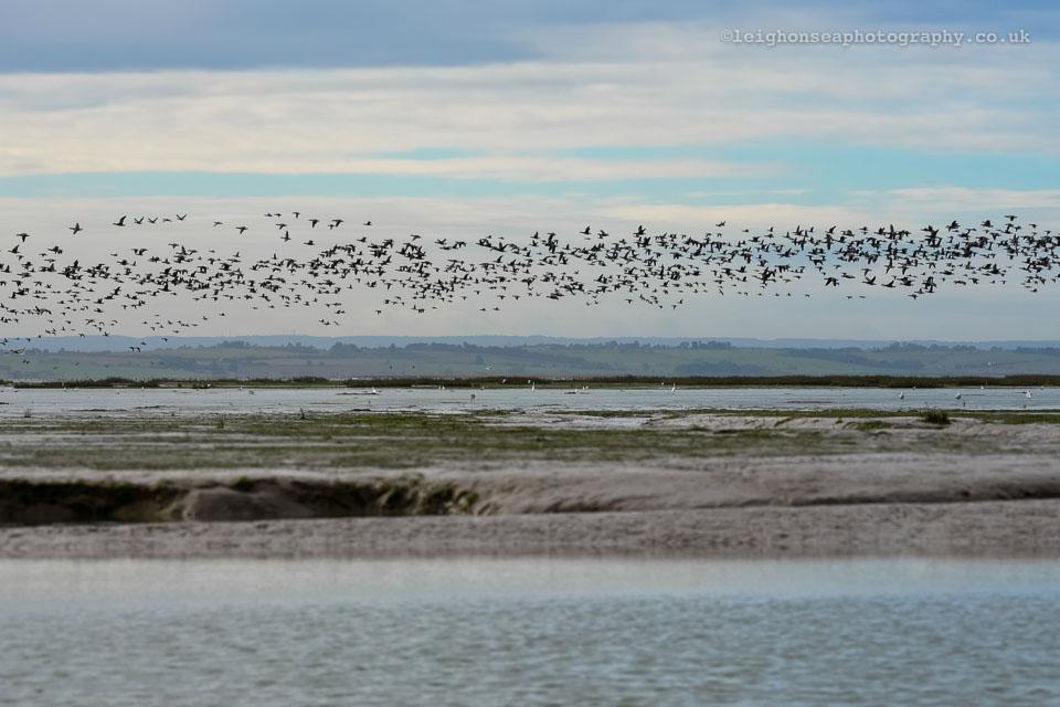 Ribbon-of-geese.jpg