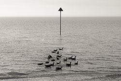 Goose-symmetry.jpg