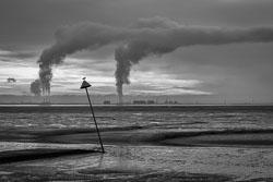 Grain-plumes.jpg