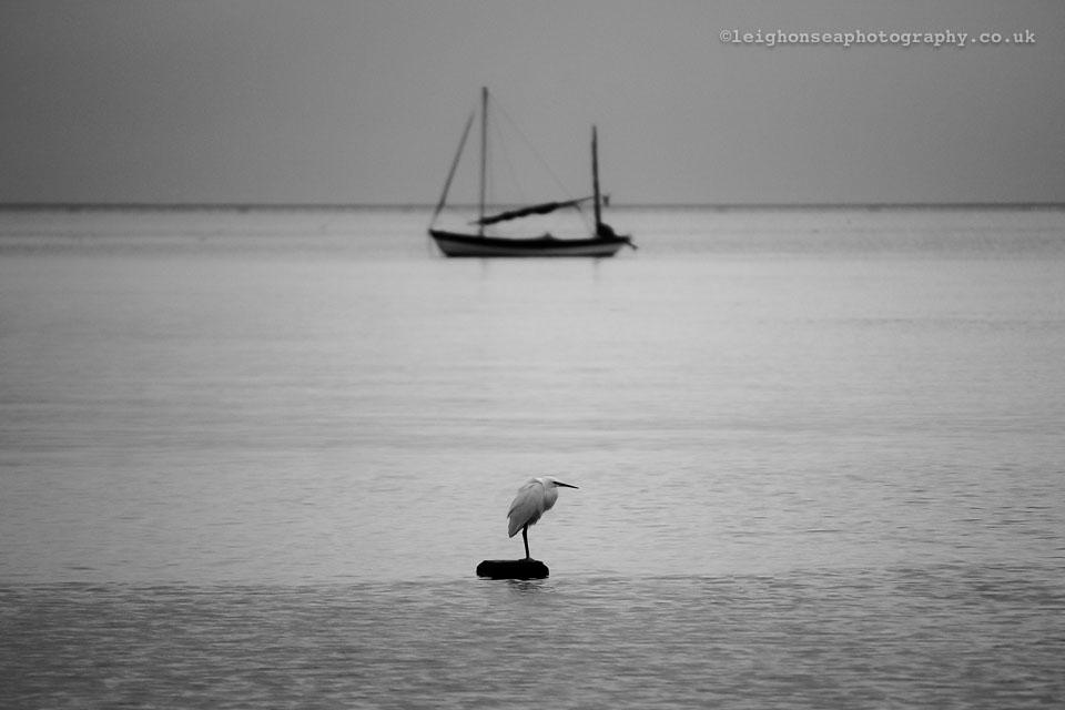 Little-egret.jpg
