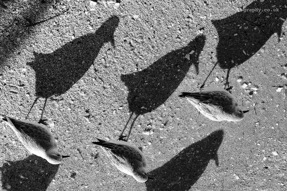 Flipping-birds.jpg