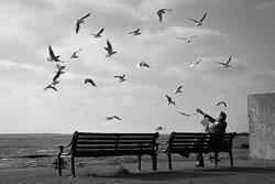 Here-come-the-gulls.jpg