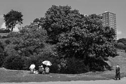 Foliage-fanciers.jpg